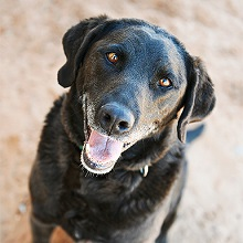 Lincoln-adoptable dog from Best Friends Animal Sanctuary