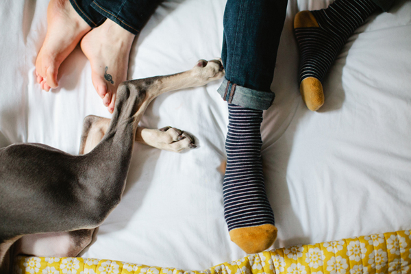 © Sarah Der Photography,  paws-and-feet