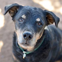 Adopt:  Terry-Best-Friend-Animal-Sanctuary-Profile