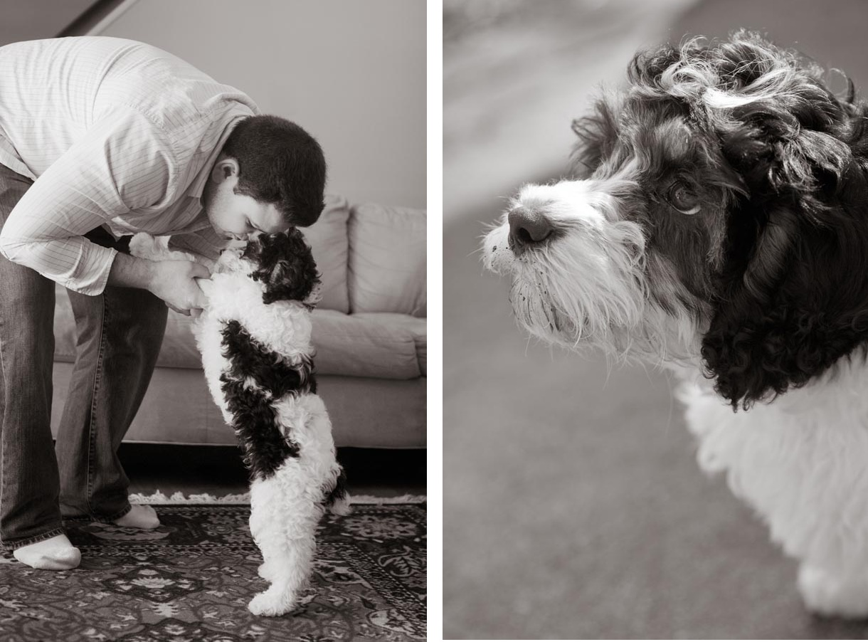 Cockapoo-Syracuse-Pet-Photographer