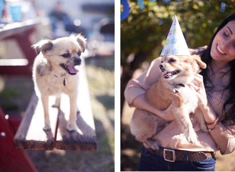 """dog birthday party"", ""party hat dog"""