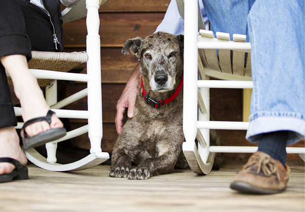 © McGraw Photography | rescue cattle dog, red collar, country-dog-on-porch, dog and rockers
