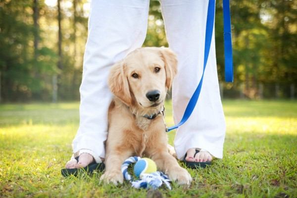 © Britt Croft Photography | golden retriever, on-location-pet-photographer