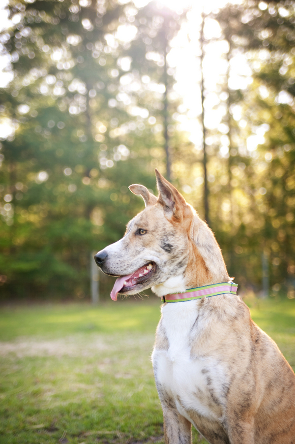 © Britt Croft Photography| beautiful dog, Southern-pet-photographer
