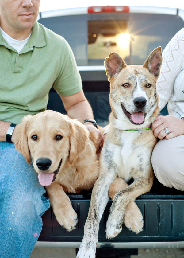 © Britt Croft Photography, family-portraits-rescue-dogs, pictures-of-dogs-trucks