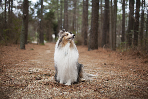 © McGraw Photography | Daily Dog Tag | Modern-dog-photography