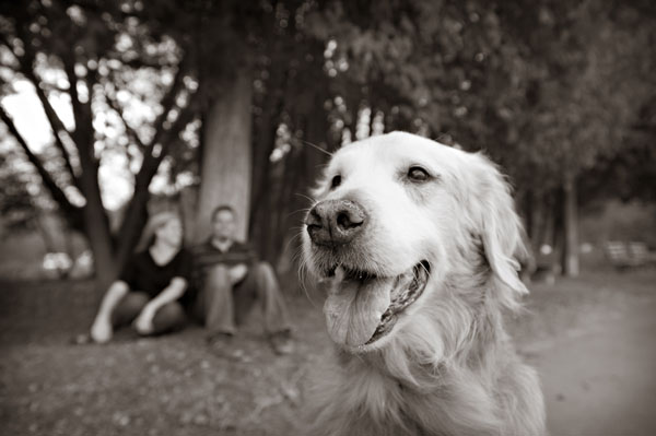 © Alice G Patterson | Daily Dog Tag | Golden Retriever at Green Lakes