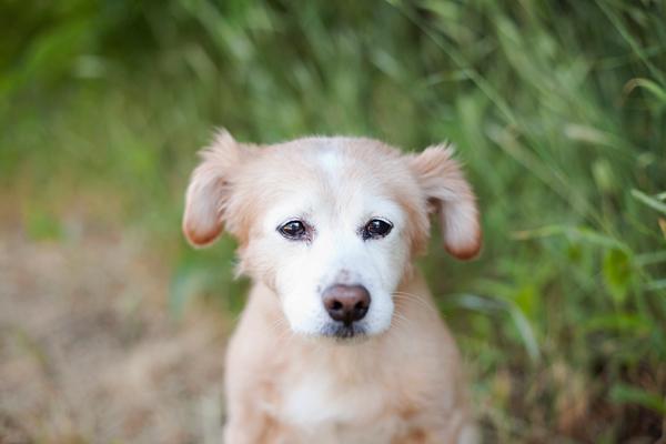 © Missy Moo Studio | Daily Dog Tag | Lifestyle-Pet-Photography