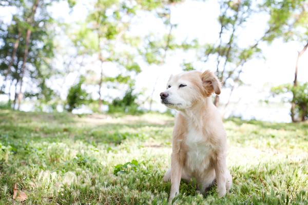 © Missy Moo Studio | Daily Dog Tag | On-location-senior-dog-photography