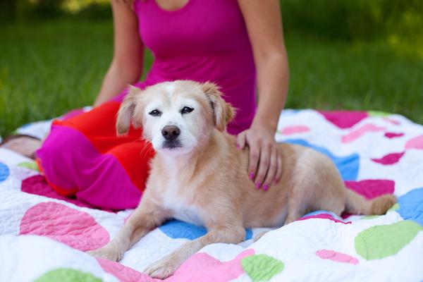 © Missy Moo Studio | Daily Dog Tag |mixed breed dog