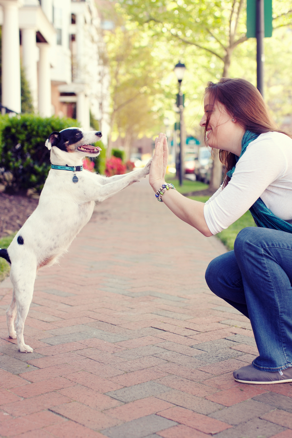 © Andi Grant Photography | Daily Dog Tag | high five Jack Russell, BFFs
