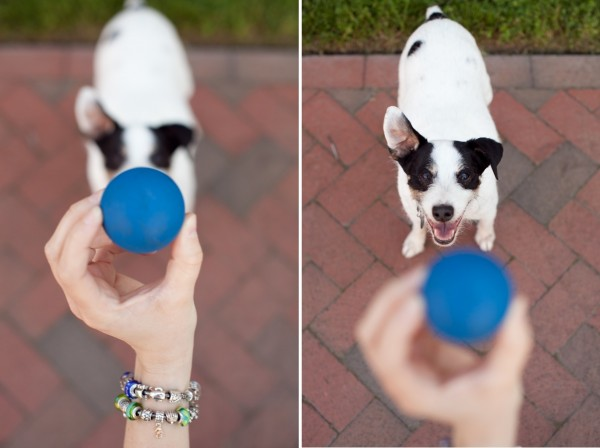 © Andi Grant Photography | Daily Dog Tag | Ball and Jack Russell Terrier
