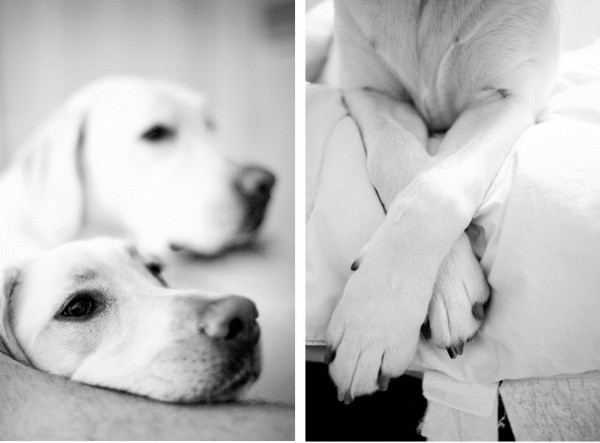 © Britt Croft Photography | Daily Dog Tag |on-location-dog-photography
