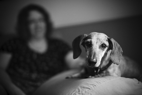 © FidoJournalism Pet Photography |Daily Dog Tag |Senior Doxie Buzz