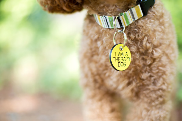 © McGraw Photography | Daily Dog Tag |certified therapy dog