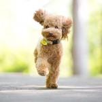 Little-Dog-Linus