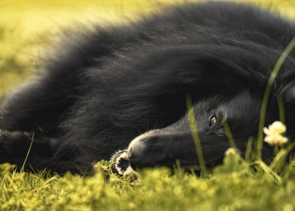 WolfCub on the grass