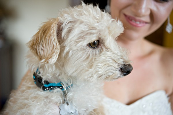 © Orange Girl | Daily Dog Tag | Yorkie Poo and bride