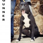 black and white mixed breed up for adoption, OK