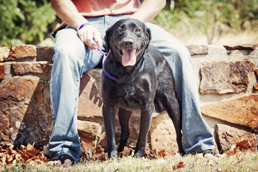 © Photos by Keshia | Daily Dog Tag |female black lab up for adoption