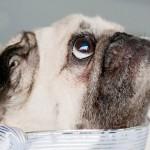 Syracuse Pet Photography