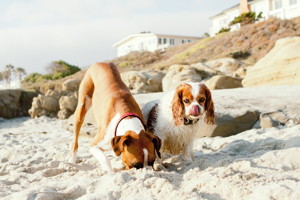 Dogs at the beach,