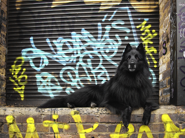 WolfCub with graffiti