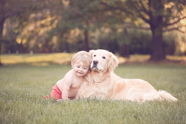 toddler hugging Golden Retriever, family portraits