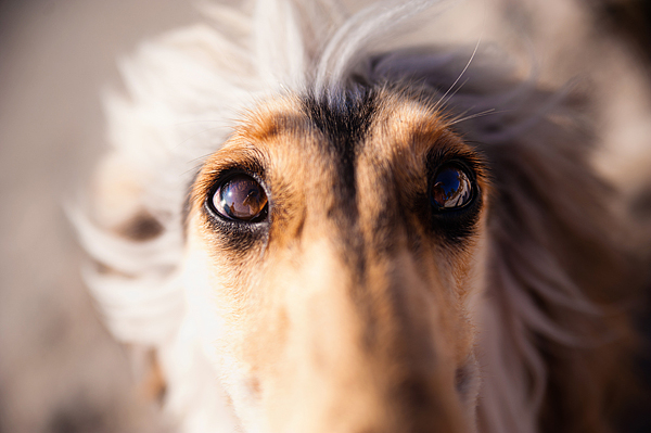 © Emilee Fuss Photography | Daily Dog Tag |gorgeous eyes, SW FL Pet Photography
