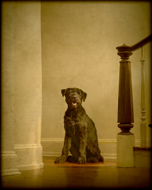 """© Andrew Pinkham Photography dog portrait at foot of stairs, """"oil painting"""" photo"""