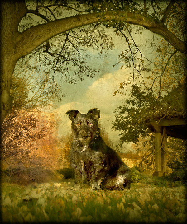 © Andrew Pinkham Photography dog portrait