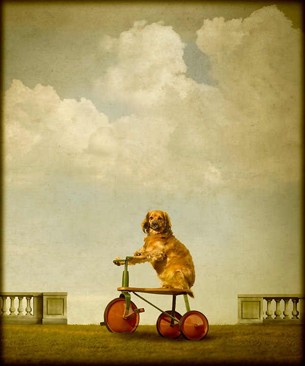 © Andrew Pinkham Photography dog photography reminescent of old Masters painting