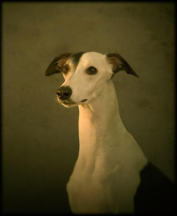 © Andrew Pinkham Photography dog portraits