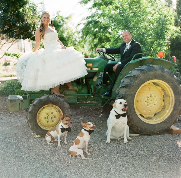 best dogs, bride and groom, Bay area pet photography, tractor