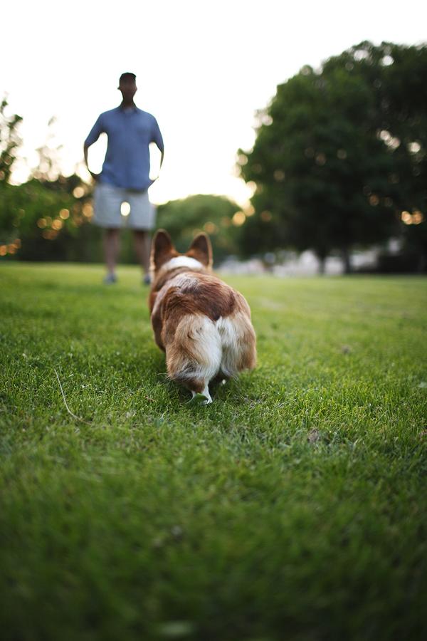 Sacramento Pet Photography
