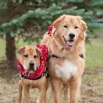 01-Christmas-Dog-Pictures-Syracuse
