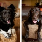 rescue-dogs-on-furniture, canine-best-friends Syracuse-dog-photography