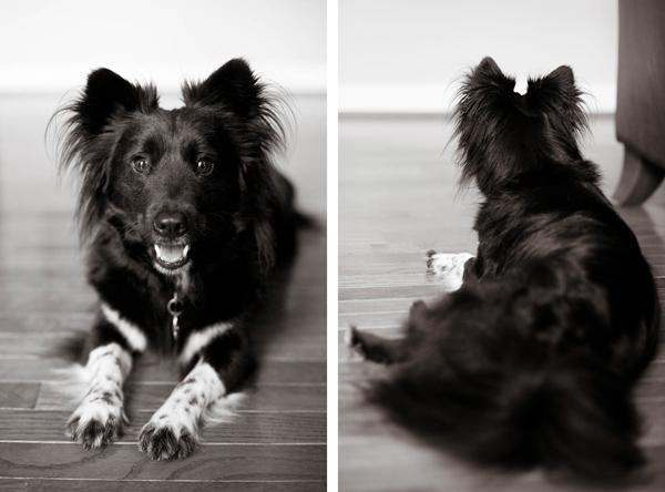 -BW-Dog-Pictures-Washington-DC, black-dog-with white-feet