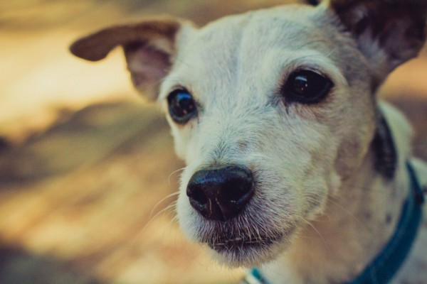 Happy Tails:  Maggie