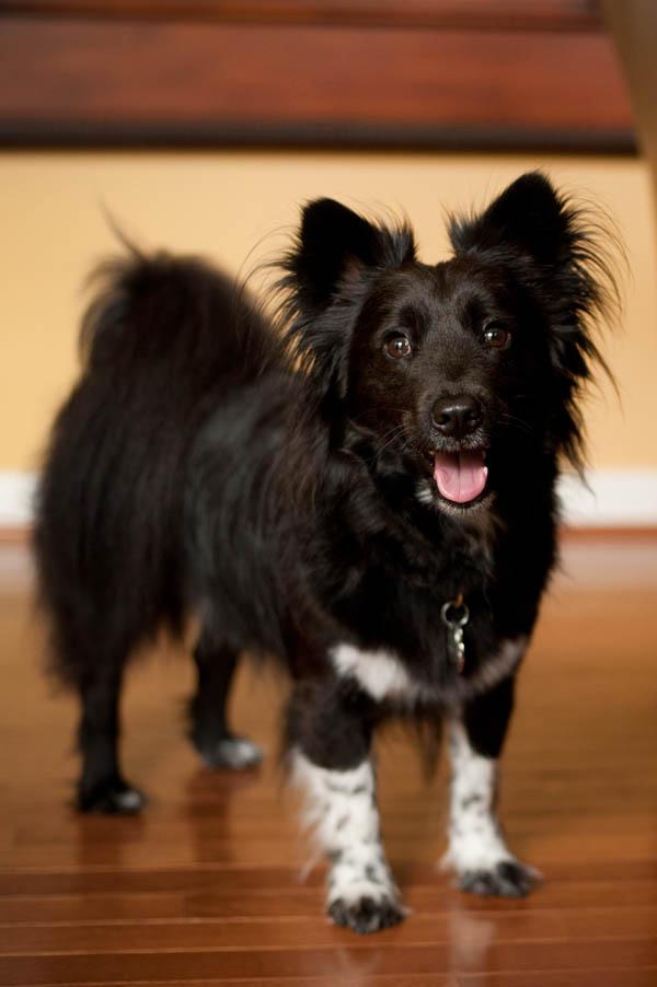 DC-Rescue-Small-Dog