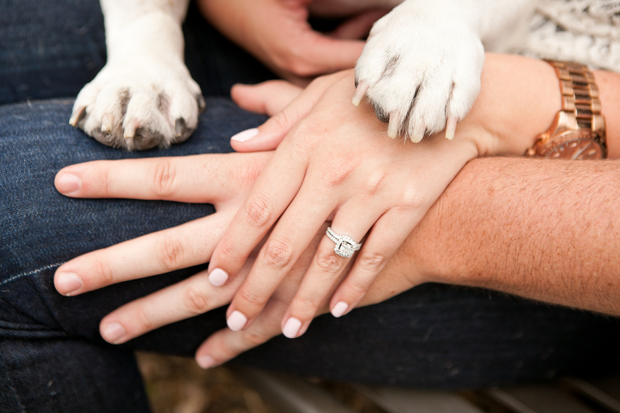 hands and paws, engagement session