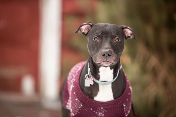 beautiful-mixed-breed-looking-for-home, sweet-adoptable-dog, Calgary-dog-portraits