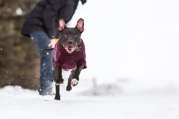 happy-dog-running-in-snow, adoptable