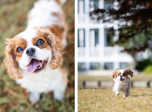 SC-dog-photographer