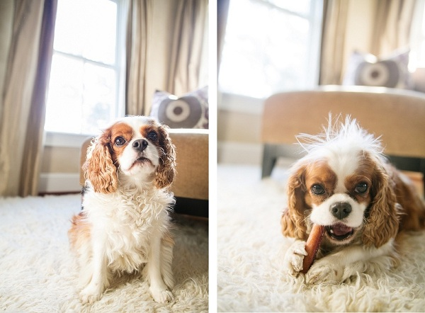 lifestyle-dog-photography