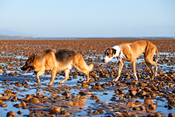 dogs-on-rocky-beach. AU-pet-photographer
