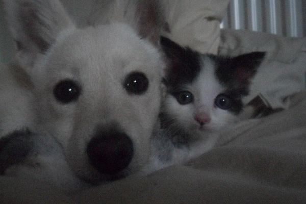 Best-friends-dog-and-kitten