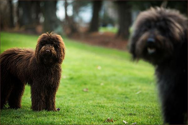 Nicole-Begley-Pittsburgh-Dog-Photographer, senior-and-pup-lab-poodle-mix