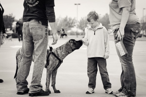 mastiff-and-boy, making-friends