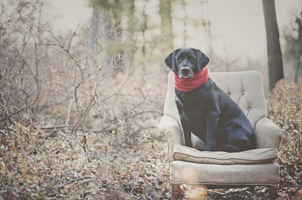 © StudioFido |Handsome-dog-wearing-scarf, holiday card photography